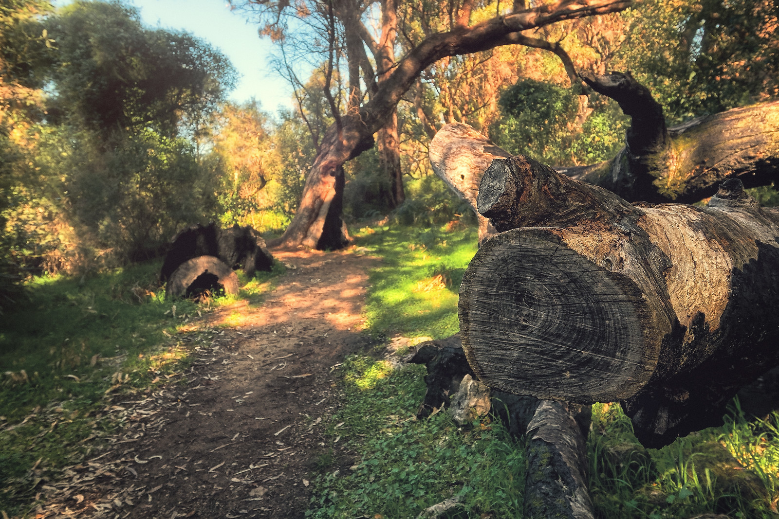 Forest path in Yanchep National Park Perth Australia
