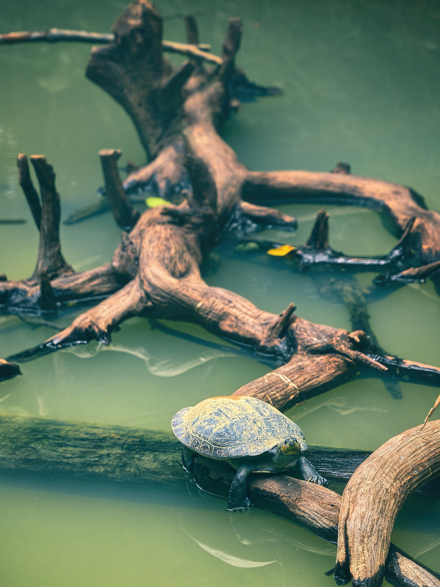 Tortoise on a Log