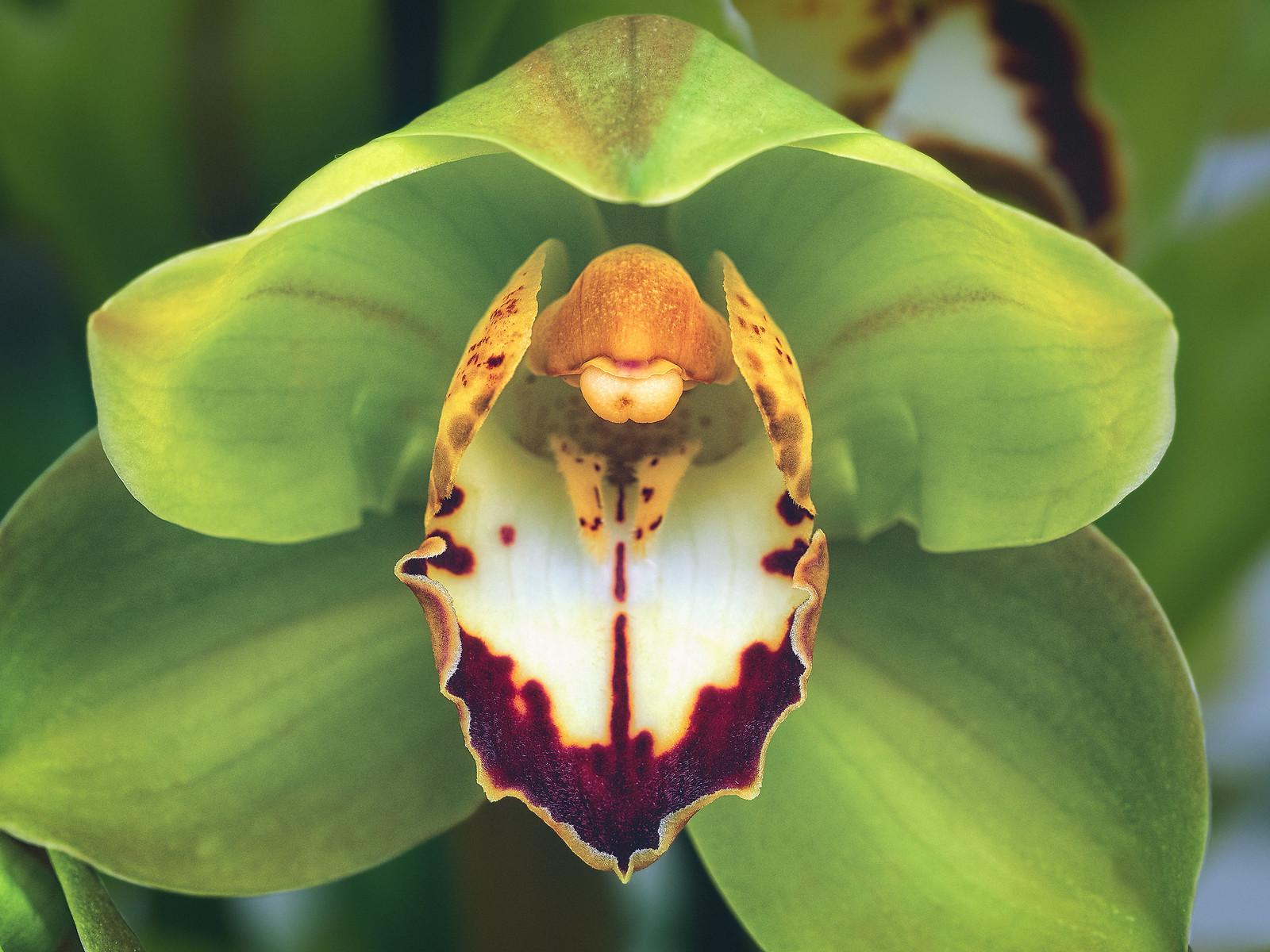 Green Orchid Pistil Flower