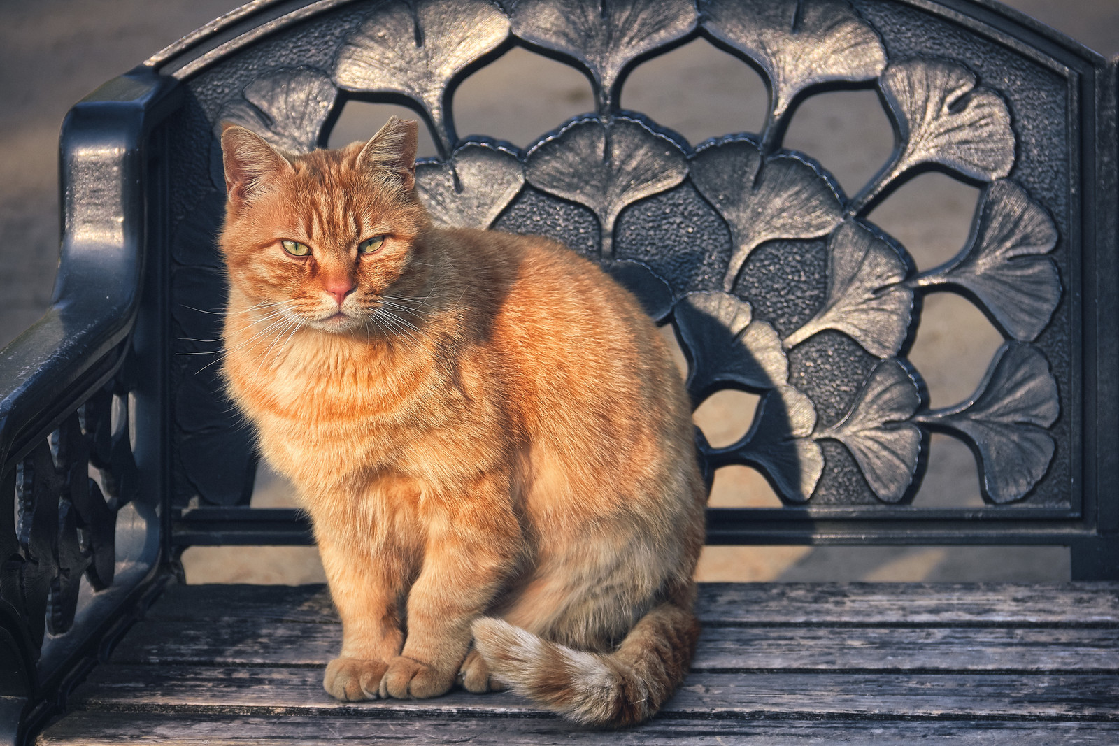 Ginger Cat on a bench in Osaka