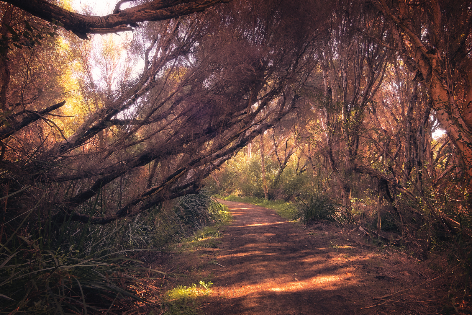 Trails of of Yanchep National Park Western Australia