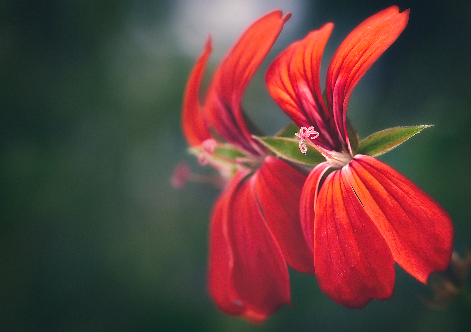 Red Flowers Dancing with Life
