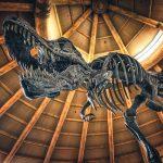Tyrannosaurus Fossil at Universal Studios Singapore