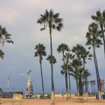 Palm Trees at Venice Beach Los Angeles
