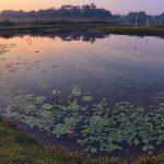 Lorong Halus Lotus Pond Singapore