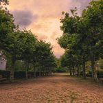 Rows of Trees in Frankfurt Germany