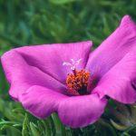 Macro of a Pink Flower Stigma