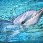 Closeup of a Dolphin