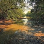 Marshes of Sungei Buloh Wetland Reserve Singapore