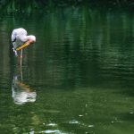 A Painted Stork by the River
